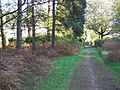 Near Fairoak Lodge - geograph.org.uk - 277577.jpg