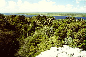 New River (Belize) - View from Lamanai High Temple to New River