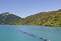 New Zealand Mussel farm-6360.jpg