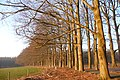 Nice sunshine on old Beech lane Schelmseweg Oosterbeek-Schaarsbergen - panoramio.jpg