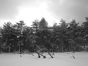 Nieve en Campa da Braña, Cervantes.jpg