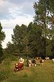 No bull on this path - geograph.org.uk - 850261.jpg