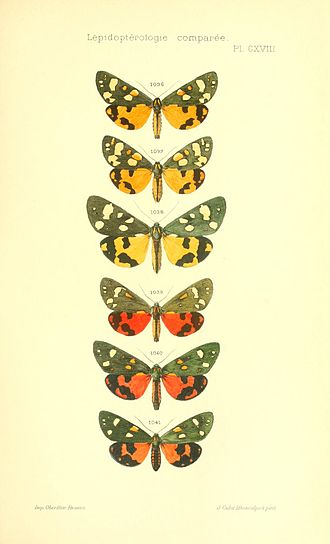 Charles Oberthür - Plate from Etudes d'Entomologie Fascicle VI 1912