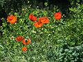 Odessa Main Botanical garden 028.jpg