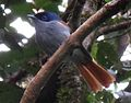 OiseauLaVierge-Mâle.JPG