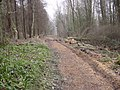 Old Mineral Line Flimby Great Wood - geograph.org.uk - 103233.jpg