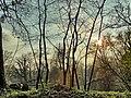 Opole, Poland - panoramio (116).jpg