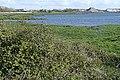 Oranmore Bay - geograph.org.uk - 1267183.jpg