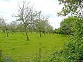 Orchard at Lettravane Farm - geograph.org.uk - 1346751.jpg
