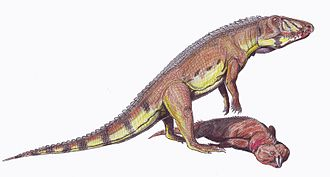 Archosauromorpha - An interaction between two archosauromorphs: Ornithosuchus ( a member of Archosauriformes) scavenging on Hyperodapedon (a rhynchosaur)