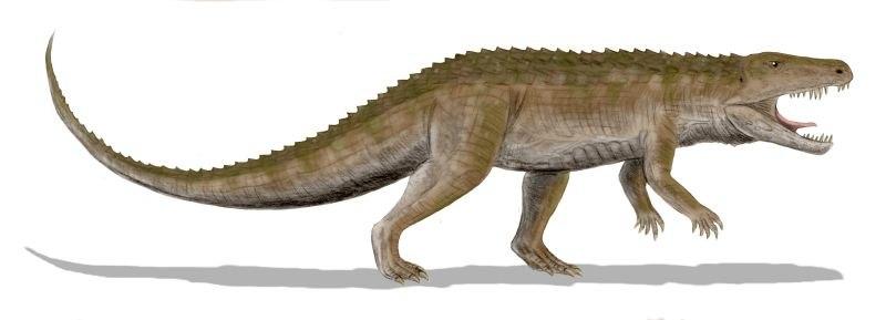 Ornithosuchus BW