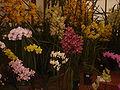 Orquideas2.jpg