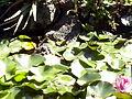 Orto botanico di Napoli 04.jpg