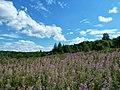 Osinskiy r-n, Permskiy kray, Russia - panoramio (85).jpg