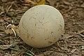 Ostrich Egg.jpg