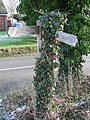 Overgrown Signs - geograph.org.uk - 1690334.jpg