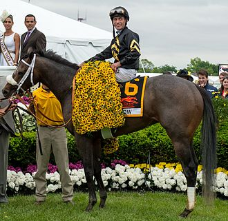 Oxbow (horse) - Oxbow in the winner's circle at the 2013 Preakness Stakes