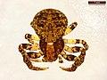 Ozyptila praticola (40140503385).jpg