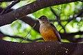 Pássaro na natureza.jpg