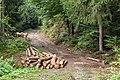 Pörtschach Bannwaldweg 8 Blochholz am Wegesrand 25082019 7061.jpg