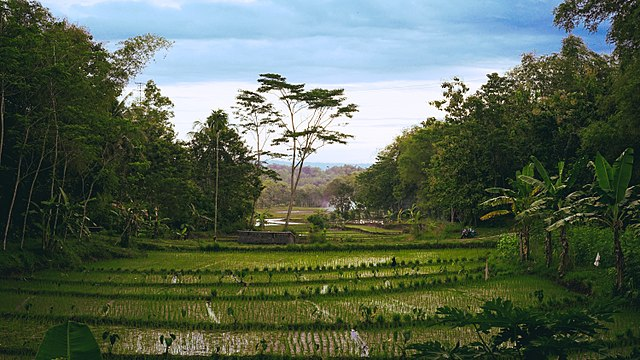 File:Paddy fields in Wonogiri, Central Java, Indonesia.jpg ...