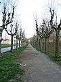 Passeig de Sant Roc.jpg