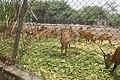 Patiala Zoo, Patiala.jpg