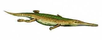 Toarcian - Pelagosaurus