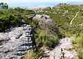 Peninsula Sandstone Fynbos - Cape Peninsula - South Africa2.jpg