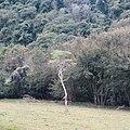 Pequena floresta a beira da PR 445 - panoramio.jpg