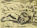 Perro cazando un ave salvaje, 1646.jpg