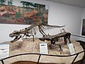 Petrified Forest National Park-Rainbow Forest Museum-3.jpg