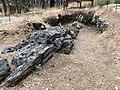 Petrified Redwood - Sequoia langsdorfii, Metasequoia -1.jpg