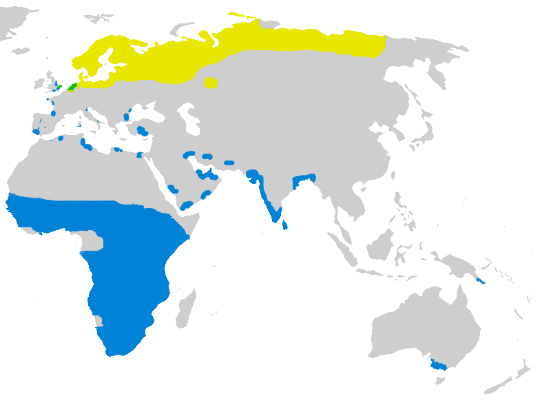 Generally Ruffs migrate north and breed in the northern hemisphere from about May to August, and generally at the end of the breeding season they migrate south and spend several months the Sub-Tropics before migrating north again