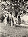 Photo taken about August 1, 1908 at Russellville, Logan County, Kentucky- Four black men hung at the same tree (NBY 4378) (cropped).jpg