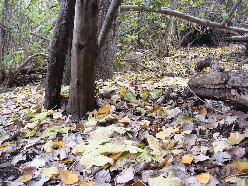 עלים תחת עצים בתל דן