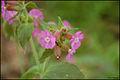 Pink flowers (5773125234).jpg