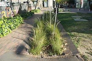Balfour Street Park - Image: Planted brick swale, balfour street pocket park