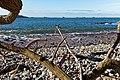 Plouezoc'h - Baie de Morlaix - 009.jpg