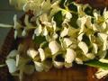 Plumeria sp. Laos, les fleurs de frangipanier sont préparées pour le plateau rituel.jpg