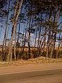 Poços de Caldas - MG - panoramio - FernandoSantos (2).jpg