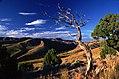 Pocatello Idaho Tree (31542796093).jpg