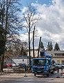 Poertschach Johannaweg Parkplatz Baumschnittarbeiten 01032016 0797.jpg