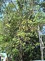 Pohonkapuk Jkt September 18.jpg