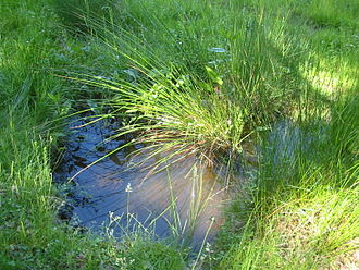 Seep (hydrology) - A seep puddle in a forest clearing