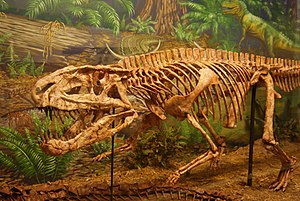 Rauisuchidae - Mounted skeleton of Postosuchus kirkpatricki in the Museum of Texas Tech University