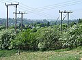 Power Poles and May Hedge, Danesford, Shropshire - geograph.org.uk - 424178.jpg