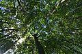 Prírodná rezervácia Jedlinka, CHKO Vihorlat (02).jpg