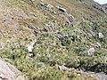 Prateleiras Trail^ - panoramio (3).jpg