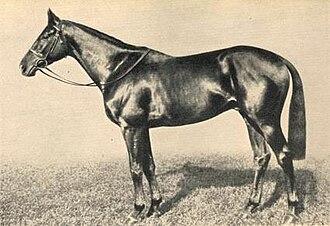 Precipitation (horse) - Image: Precipitation